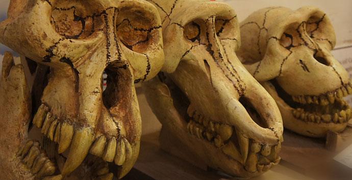 Skulls Stone Science